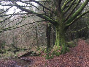forêt, écologie, demain