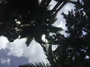 palmiers, huile de palme