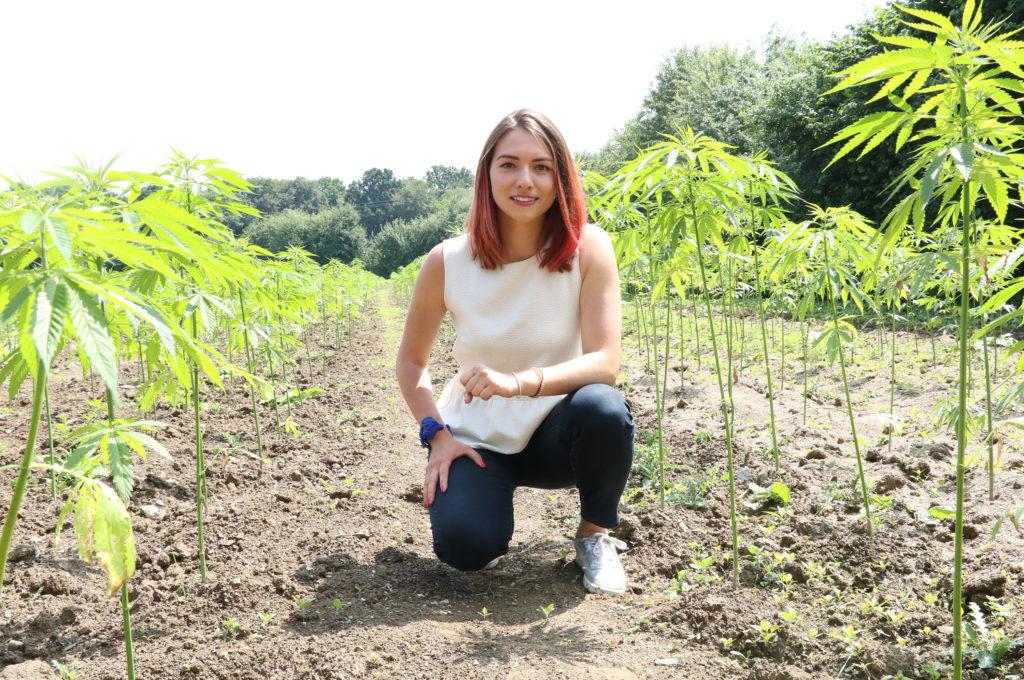 cannabis sativa, chanvre, anti-stress, huile