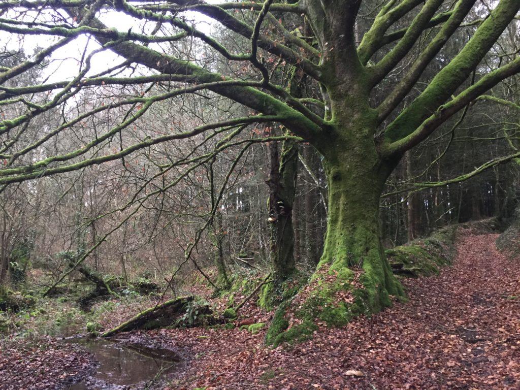 arbre, écologie, nature